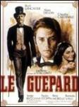 medium_guepard.JPG